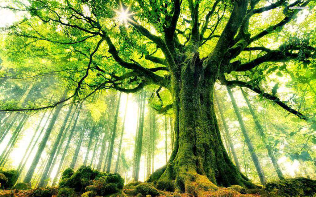 Ağaçlar da Konuşur