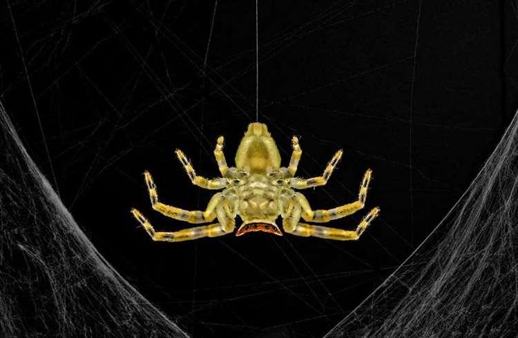 Yengeç Örümceği