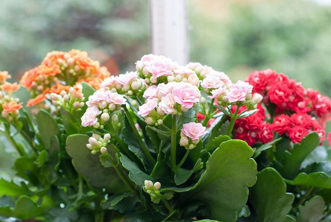 En Güzel Ev Çiçekleri