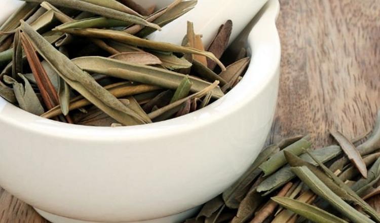 Zeytin Yaprağı Çayı Nasıl Yapılır?